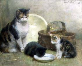 Cat and Kittens 1889