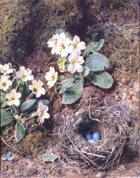 Primroses and Bird's Nest with Three Blue Eggs