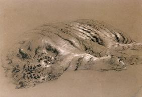 A Sleeping Tiger 1876 cil &