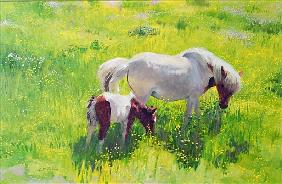 Piebald horse and foal (oil on board)