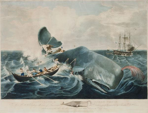 Capturing a Sperm Whale, engraved by J. Hill published