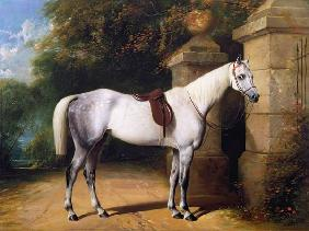 A Grey Horse by Park Gates 1851