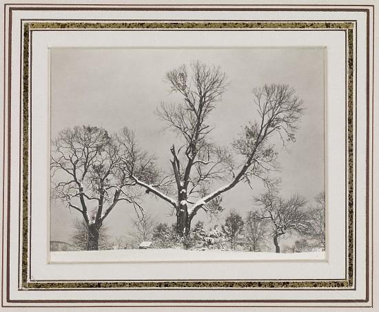 Alfred Stieglitz - Trees in Winter